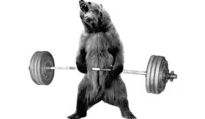 bear-93010_600x350
